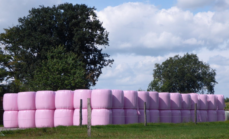 rosa-ballen